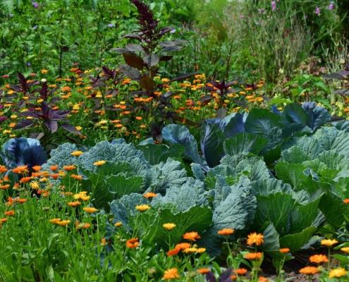 levende tuin
